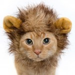 Lion Mane Cat Wig