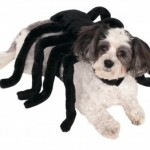 Spider Harness Halloween Dog Costume