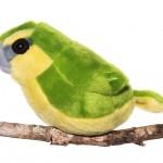 Maui Parrotbill